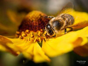 Makrofotografie: Bienchen und Blümchen 8