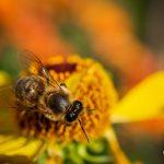 Makrofotografie: Bienchen und Blümchen 7