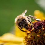 Makrofotografie: Bienchen und Blümchen 4