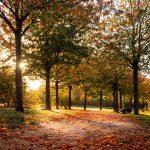 Herbstfotografie: Rotes Laub zur Abendstunde