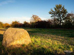 Herbstotografie: Wiese zur goldenen Stunde
