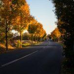 Herbstfotografie: goldenes Laub