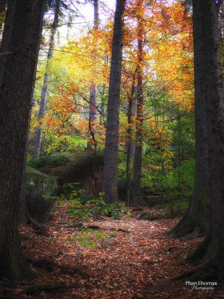 Schrammsteine: Herbstwald 2