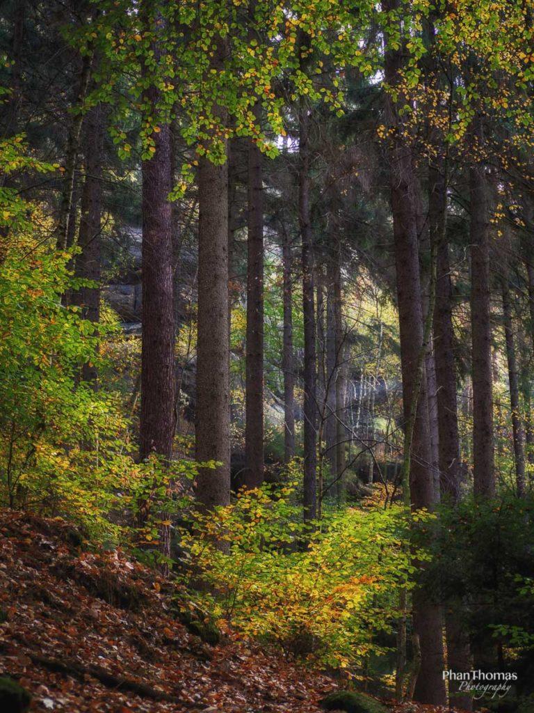 Schrammsteine: Herbstwald 1