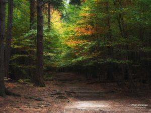 Schrammsteine: Herbstwald 3