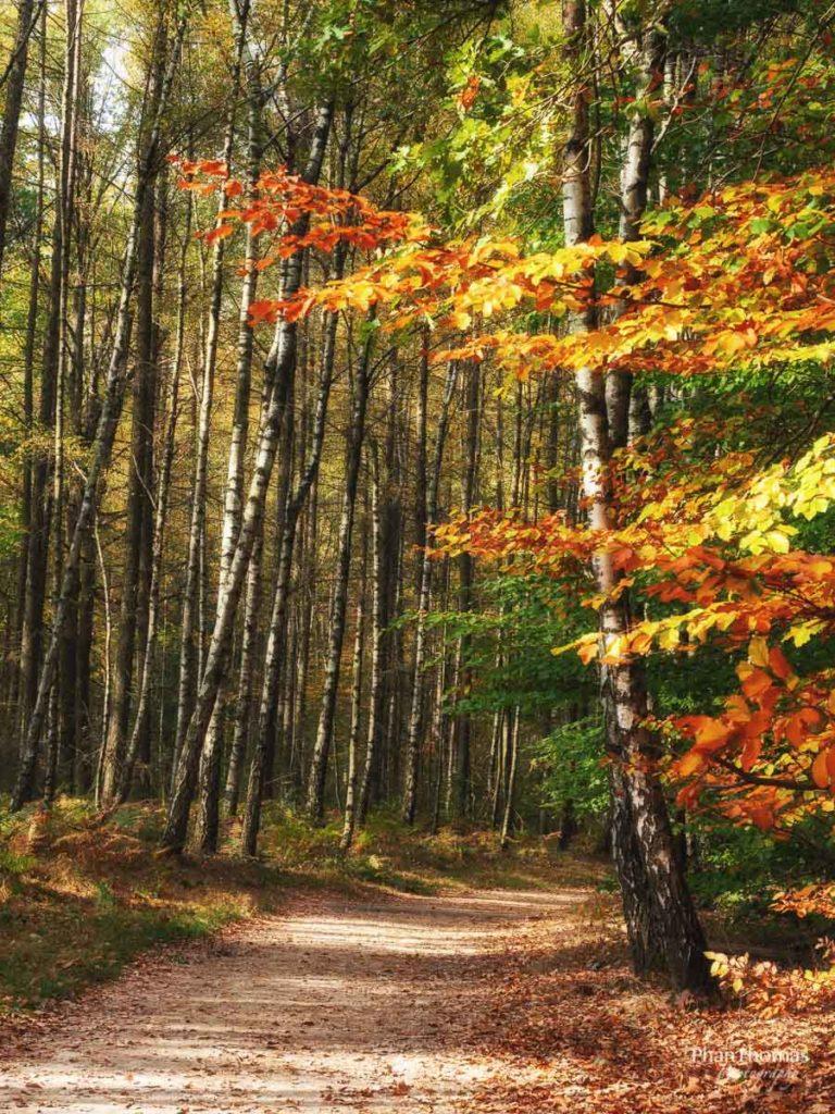 Schrammsteine: Herbstwald 4