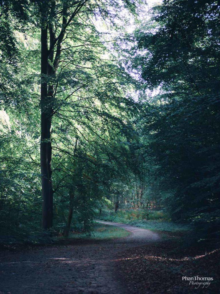 Wald nahe Binz 2