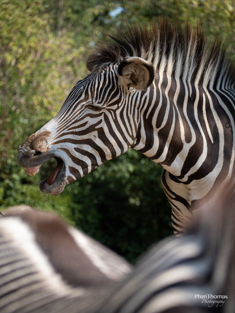 Leizpiger Zoo: Gesundheit!