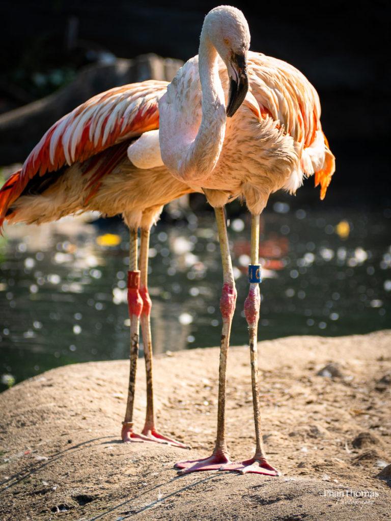 Flamingos im Sonnenlicht