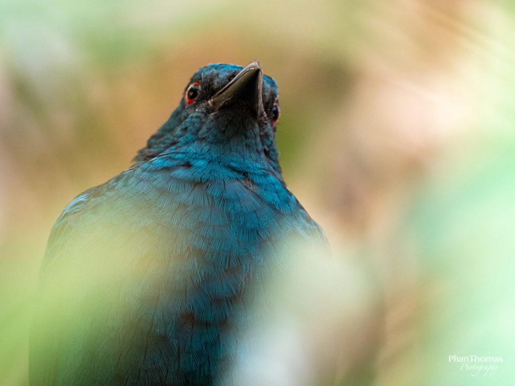 Leizpiger Zoo: Ein ... Vogel?