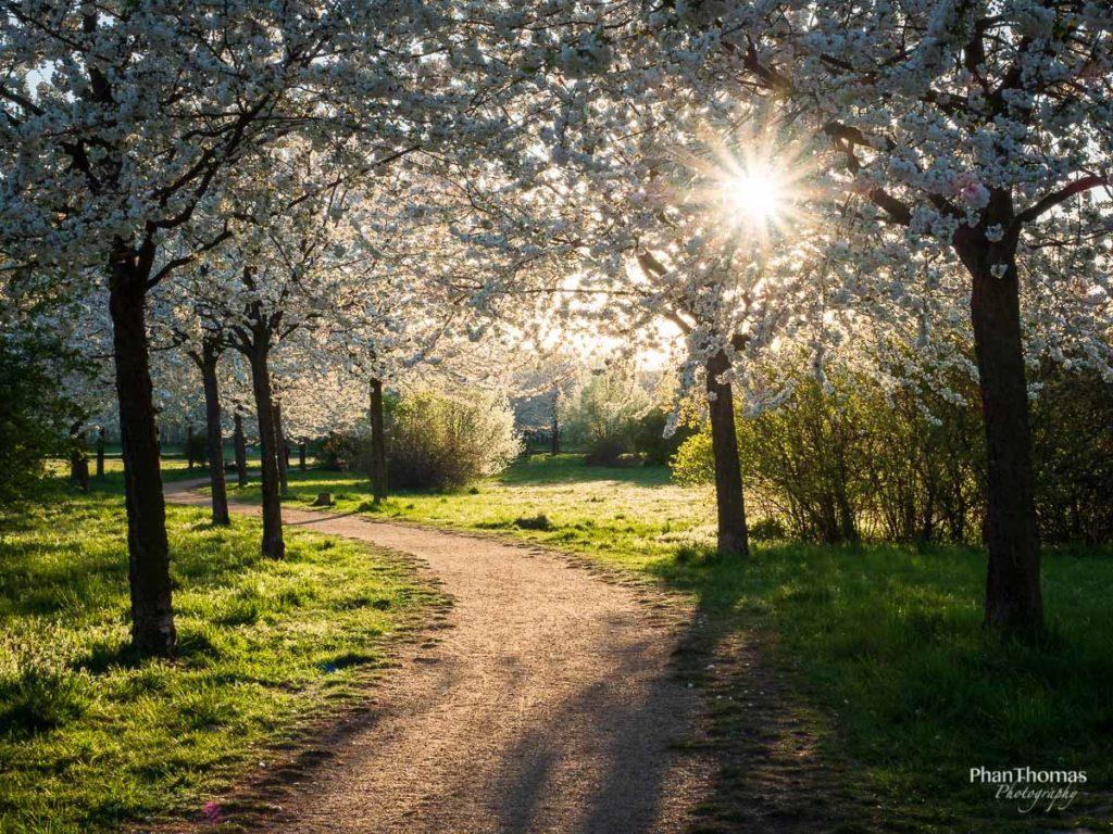 Blütenpfad im Sonnenuntergang