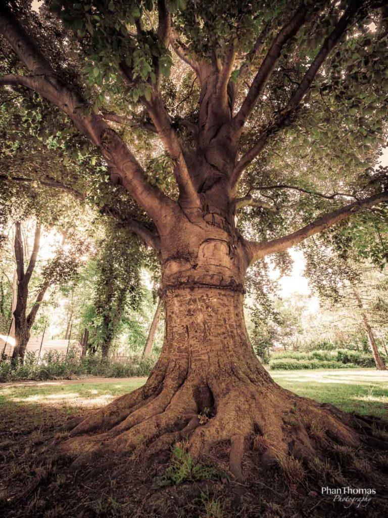 Alt wie ein Baum ...