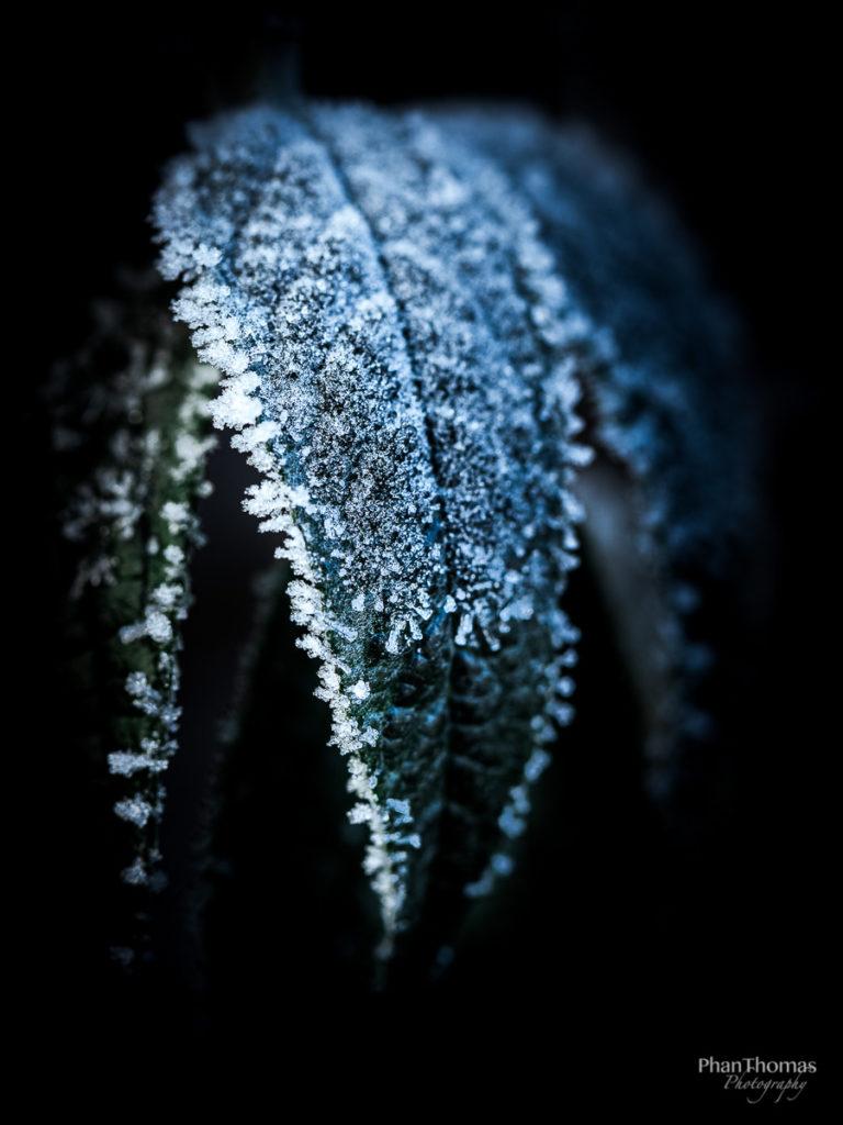 Frost an Pflanzen