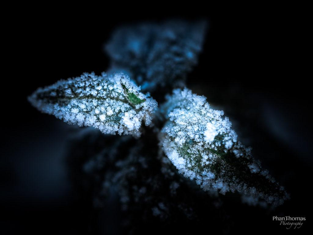 Frost an Pflanzen 2